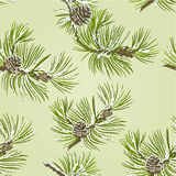 Seamless texture branch Pine tree with pine cones and snow vector. Illustration Stock Images