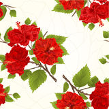 Seamless texture branch red hibiscus tropical flowers  crack vintage hand draw vector Royalty Free Stock Image