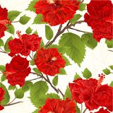 Seamless texture branch red hibiscus tropical flowers crack vintage vector illustration editable 图库摄影