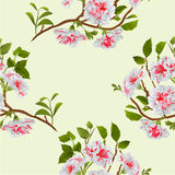 Seamless texture branch white hibiscus tropical flowers  on a white background vintage hand draw  vector Stock Photos