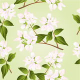 Seamless texture branches decorative shrub with white flowers vector Royalty Free Stock Image