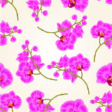 Seamless texture branches orchid Phalaenopsis purple flowers tropical plants green stem and buds  vintage hand draw vector Royalty Free Stock Photography