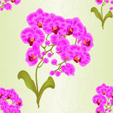 Seamless texture branches orchid Phalaenopsis purple  flowers tropical plants stem and buds and leaves  vintage vector Stock Photography