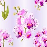 Seamless texture branches orchid Phalaenopsis  purple and white flowers and leaves tropical plants  stem and buds on a white backg. Seamless texture branches Royalty Free Stock Photo