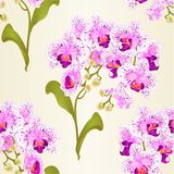 Seamless texture branches orchid Phalaenopsis purple and white flowers tropical plants green stem and buds and leaves  vintage vec Royalty Free Stock Images