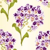 Seamless texture branches orchid Phalaenopsis spotted purple and white flowers tropical plants green stem and buds and leaves  vin. Tage vector botanical Stock Image