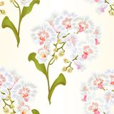 Seamless texture branches orchid Phalaenopsis white flowers  Stock Image