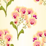 Seamless texture branches orchid Phalaenopsis yellow flowers tropical plants green stem and buds and leaves vintage vector botani Stock Photography
