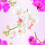 Seamless texture branches orchids flowers white and purple Phalaenopsis tropical plant stems and buds vintage vector botanical Royalty Free Stock Photo