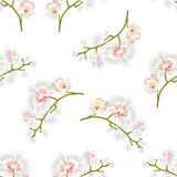 Seamless texture Branches orchids Phalaenopsis White flowers tropical plants green stem and buds  vintage  vector. Botanical illustration hand draw Royalty Free Stock Photography