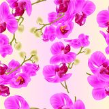 Seamless texture branches orchids purple flowers  tropical plant Phalaenopsis  on a white background vintage vector botanical illu. Stration for design hand draw Royalty Free Stock Photography