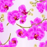 Seamless texture branchs orchids flowers purple Phalaenopsis tropical plant stems   Royalty Free Stock Image