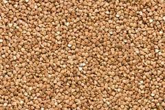 Seamless texture of buckwheat Royalty Free Stock Image