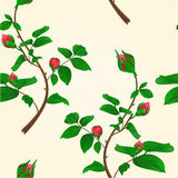 Seamless texture buds of climbing roses vintage vector Royalty Free Stock Photo