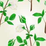 Seamless texture buds white Rose stem with leaves vintage vector Royalty Free Stock Photo