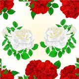 Seamless texture bunch Three red and white roses with  buds vintage editable festive background vector illustration. Hand draw Royalty Free Stock Photo