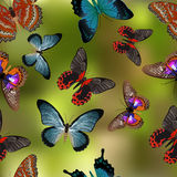 Seamless texture Butterflies. Realism style execution. Butterflies illustration Stock Images