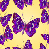 Seamless texture butterfly  Apatura iris  vector Stock Images