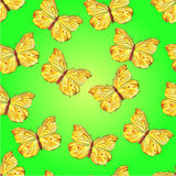 Seamless texture butterfly   Royalty Free Stock Image