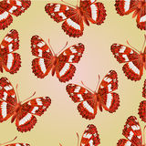 Seamless texture butterfly Limenitis camilla   vector Stock Photos