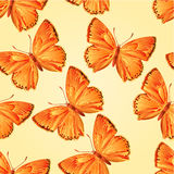 Seamless texture butterfly Lycaena virgaureae vector Royalty Free Stock Image