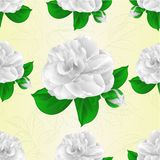 Seamless texture camellia Japonica white flower with bud vintage vector illustration editable Royalty Free Stock Image