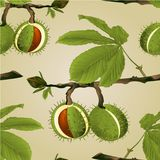 Seamless texture Chestnut tree conkers with leaves vintage fall background vector editable hand draw. Illustration