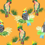 Seamless texture cockatoo parrots Stock Image