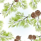 Seamless texture conifer Branch Pine. With pine cones  winter snowy natural background vector illustration editable hand draw Stock Photography