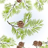 Seamless texture conifer Branches Pine  with pine cones  winter snowy natural background vector illustration editable. Hand draw Stock Photography