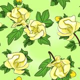 Cotton flowers seamless texture Royalty Free Stock Photography