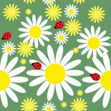 Seamless texture with daisies and ladybug Royalty Free Stock Image