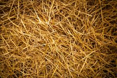 Seamless texture of dry golden hay stock photo