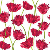 Seamless texture with flower tulip royalty free illustration