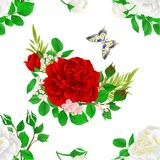 Seamless texture flower white and red roses and buds and a butterfly vintage festive background vector illustration editable Royalty Free Stock Images
