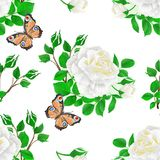 Seamless texture flower white rose  and buds  and a butterfly vintage. Festive  background vector illustration editable hand draw Stock Photography