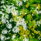 Seamless texture with flowers Stock Image