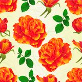 Seamless texture flowers orange rose and buds vintage  vector illustration editable Stock Image