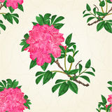 Seamless texture flowers  pink rhododendron twig Mountain shrub vintage crack vector Stock Image