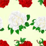 Seamless texture flowers red and white roses stem  vintage vector illustration editable. Hand draw Royalty Free Stock Photo