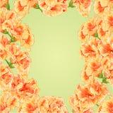 Seamless texture frame of hibiscus vector Stock Photos