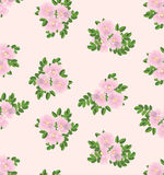 Seamless texture with gentle roses Royalty Free Stock Photos
