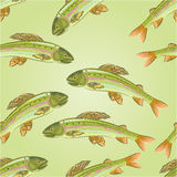 Seamless texture Grayling, salmon-predatory fish vector Stock Image