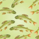 Seamless texture Grayling, salmon-predatory fish vector. Seamless texture Grayling, salmon-predatory fish  vector illustration Stock Image