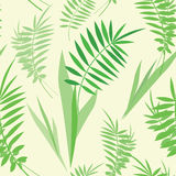 Seamless texture with green fern leaves Royalty Free Stock Photo