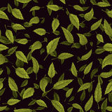 Seamless texture of green leaf on black background Stock Image