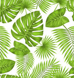 Seamless Texture with Green Tropical Leaves Royalty Free Stock Photography