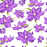 Seamless texture with hand-drawn lilac clematis Royalty Free Stock Images