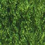 Seamless texture hanging down worn-out ripped rags cloth or paper. Seamless texture hanging down worn-out ripped rags green cloth or paper. Pattern of seaweed or stock photo
