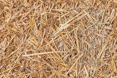 Seamless texture hay, straw Stock Photo